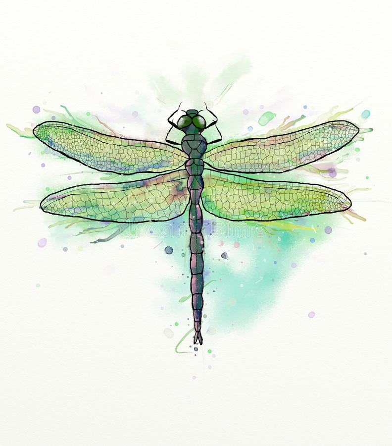 Download Dragonfly stock image. Illustration of paper, watercolor - 67336705