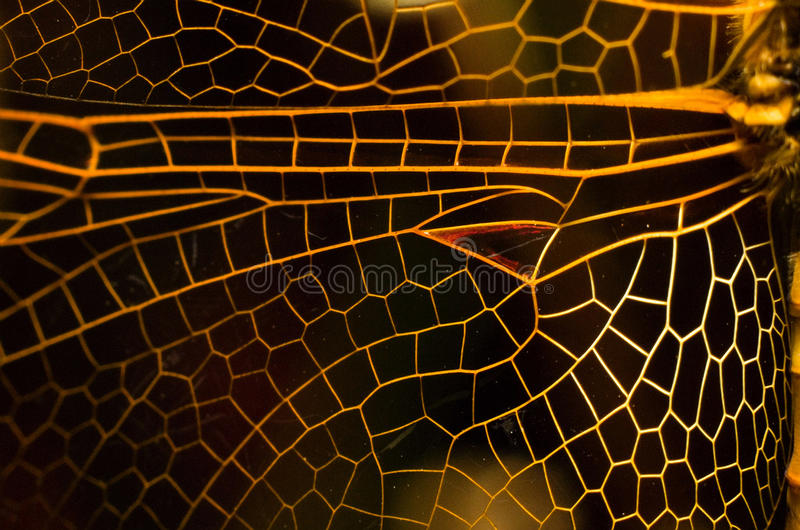Download Dragonfly wing stock photo. Image of dragonfly, design - 14165610