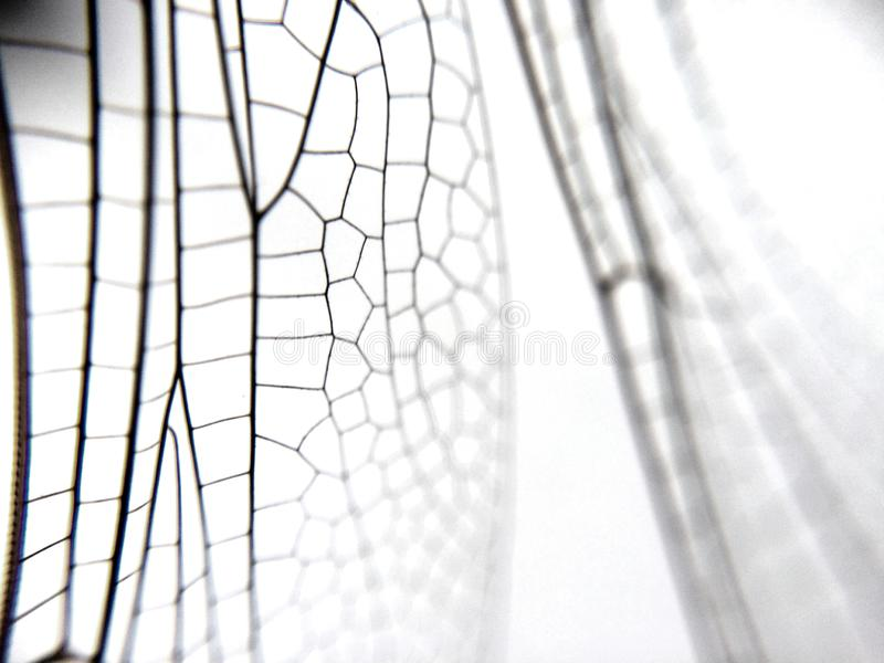 Dragonfly wing close up background with zoomed transparent lattice. Or macro chitin net stock photo