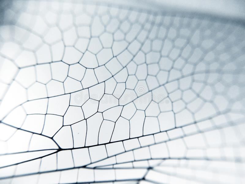 Dragonfly wing close up background with zoomed transparent lattice. Or macro chitin net stock photography