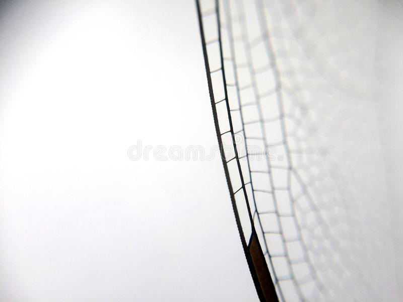 Dragonfly wing close up background with zoomed transparent lattice. Or macro chitin net stock image