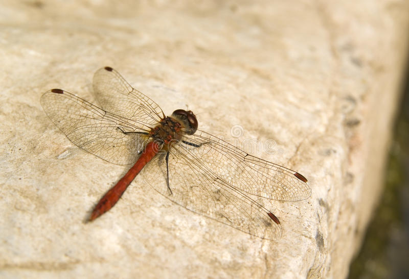 Dragonfly wings background royalty free stock image