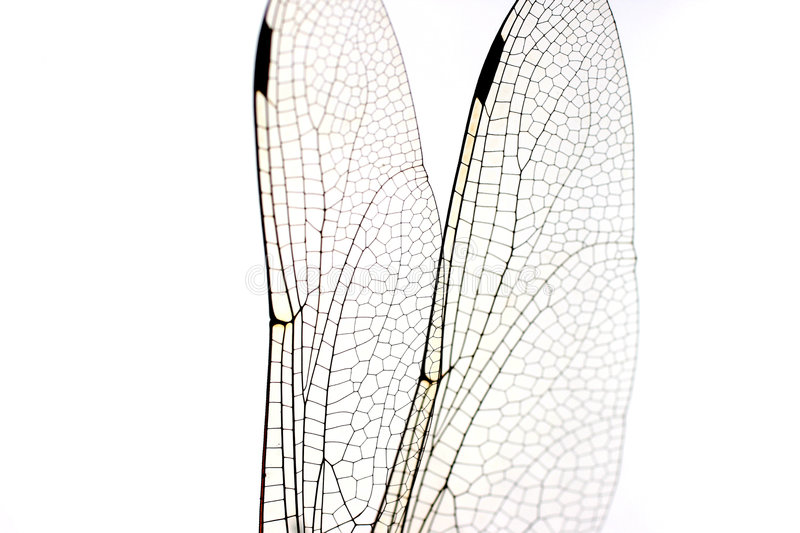 Dragonfly Wings Macro Stock Photography