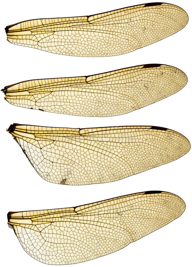 Download Dragonfly Wings Set Stock Photos - Image: 6138463
