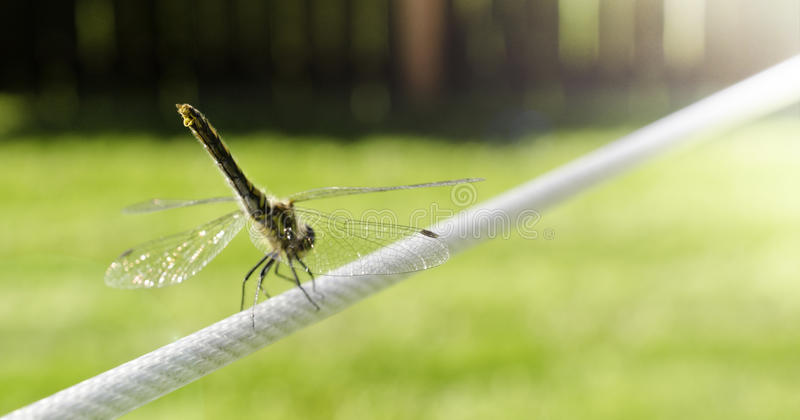 Dragonfly on a Wire stock images