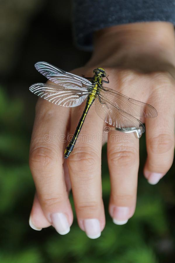 Dragonfly on a woman`s hand like a jewellery royalty free stock images