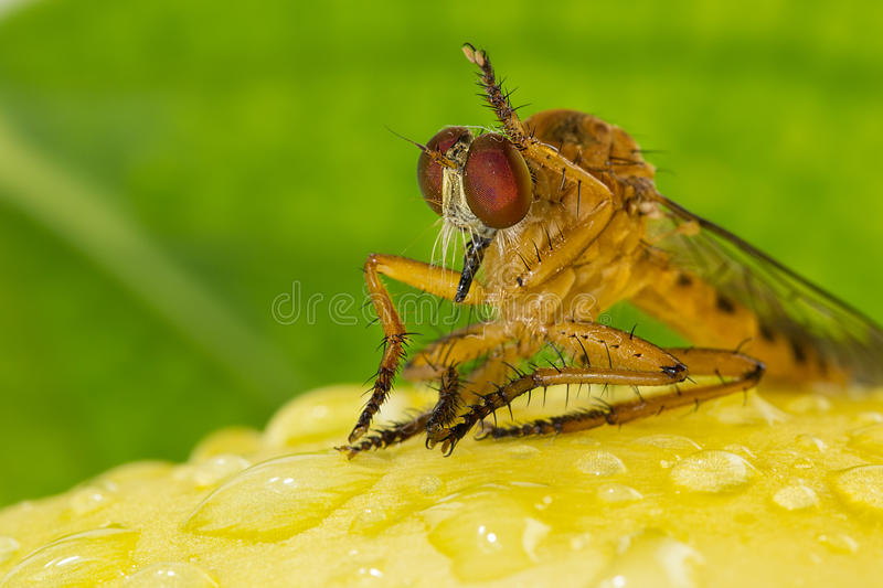 Dragonfly with yellow flower. royalty free stock image