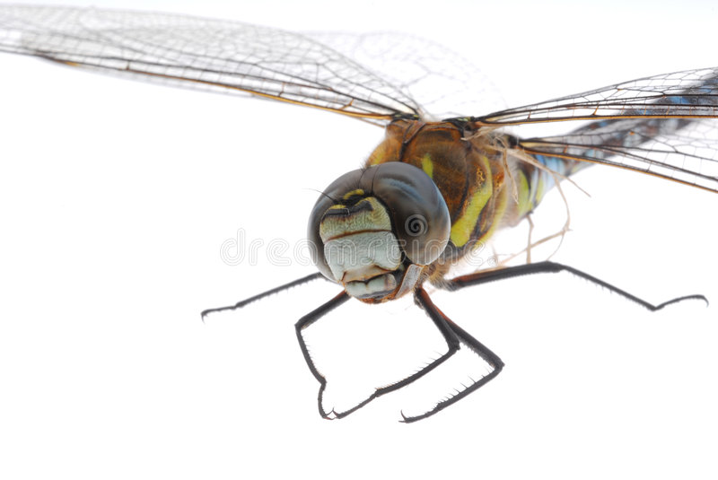 Dragonflye royalty free stock photography