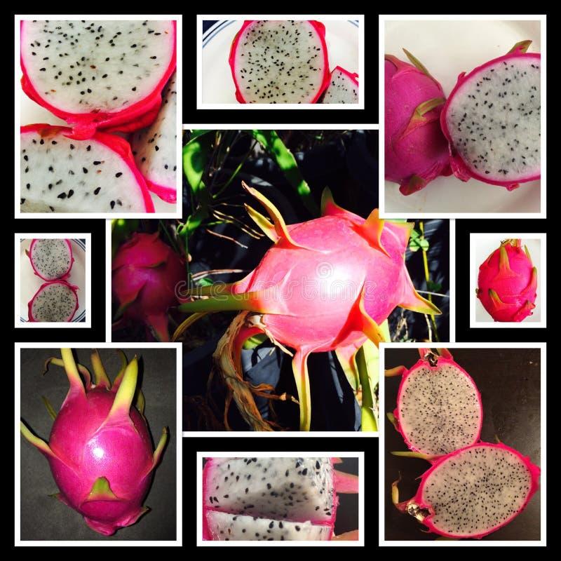 Dragonfruit-Weiß lizenzfreie stockbilder