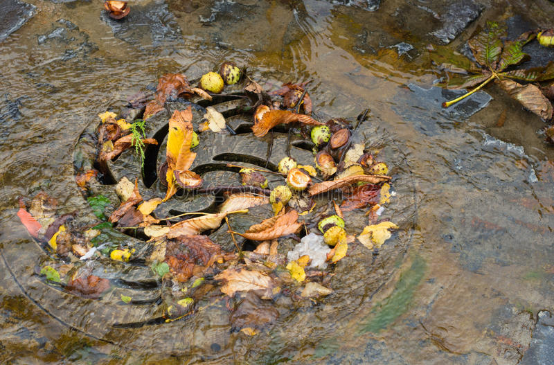 Drain in autumn. Drain filled with autumn leaves and water royalty free stock photography