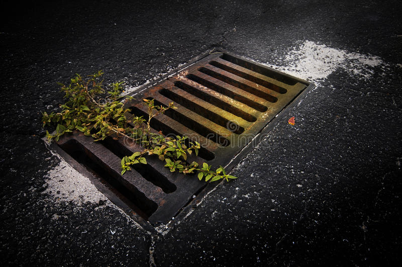 Download Drain in road stock image. Image of metal, road, weed - 39301013