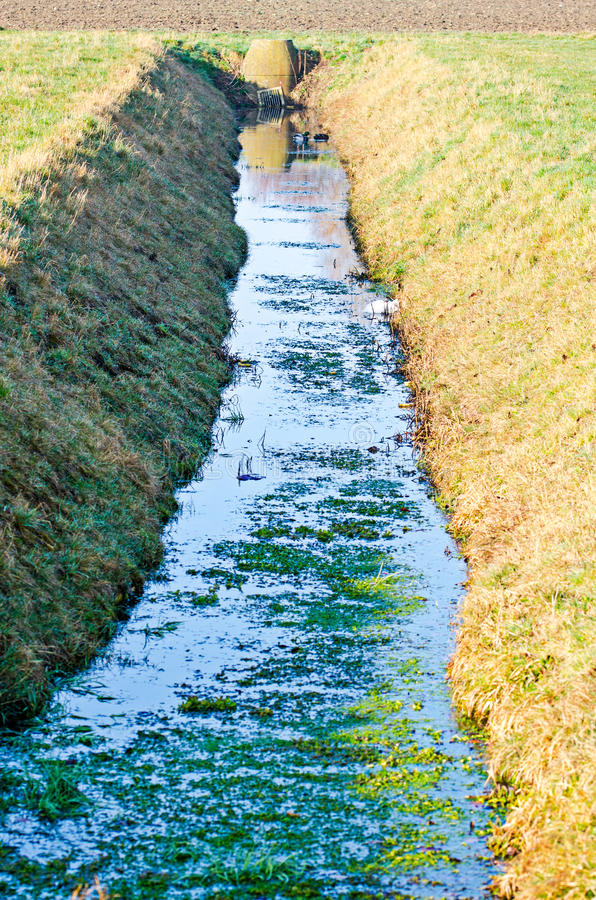 Drainage ditch. With algae in it royalty free stock images