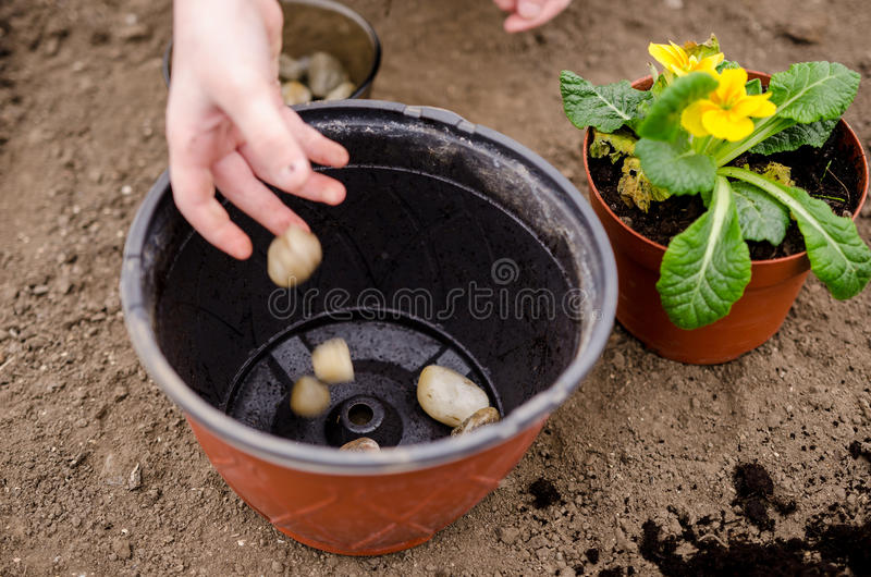 Drainage preparation. Little girl preparing drainage for pot flower royalty free stock photos