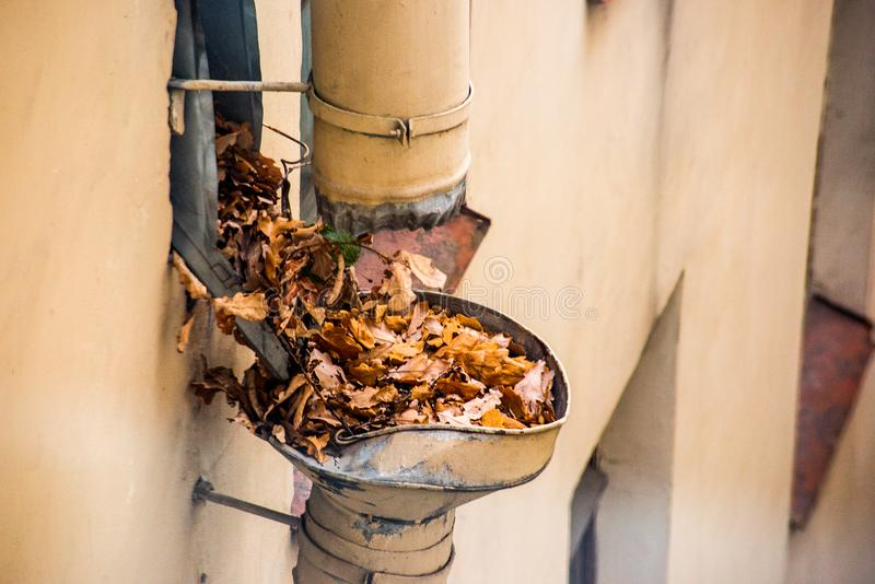 Drainpipe clogged with autumn leaves royalty free stock photos