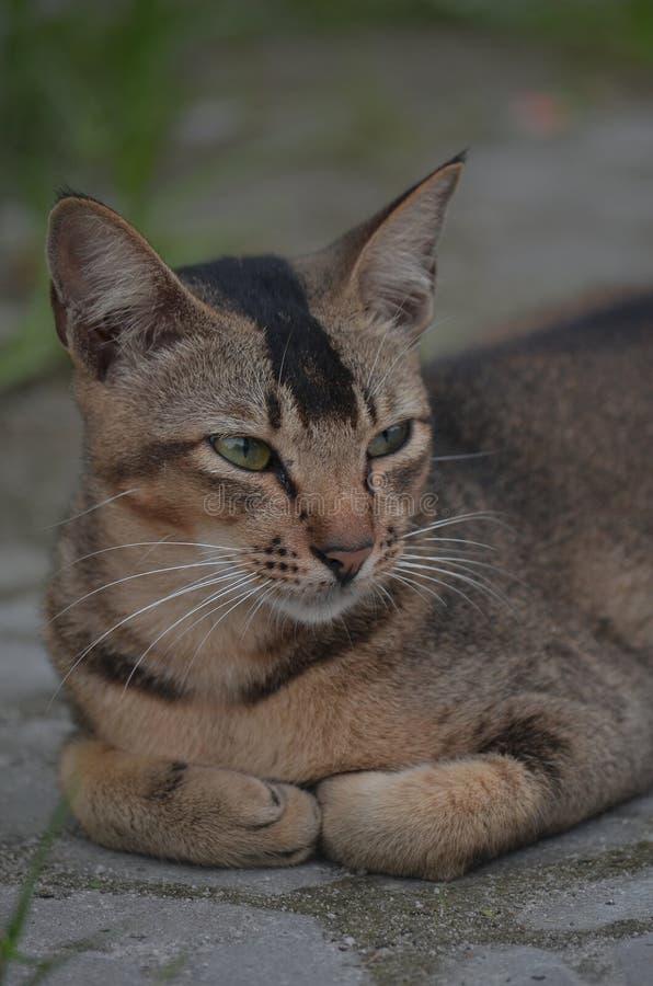 drak cat stock photo