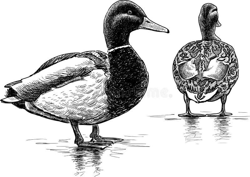 Drake y duque stock de ilustración