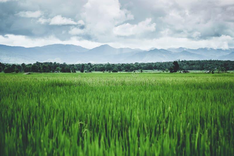 Dramático hermoso del paisaje del campo asiático fotos de archivo