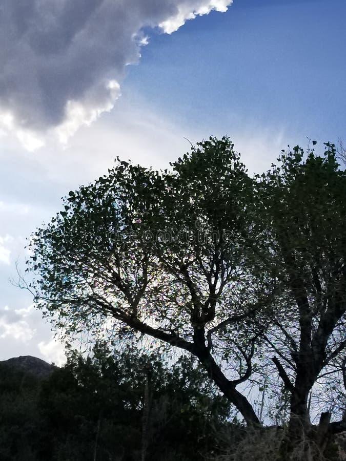 Drama del árbol fotos de archivo