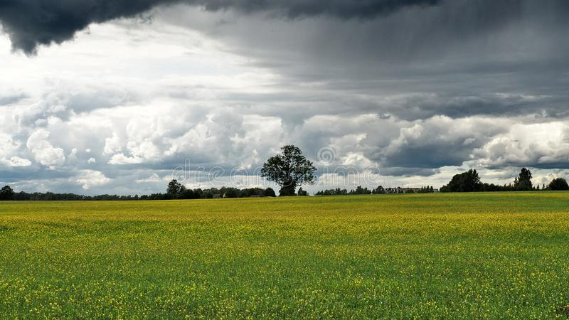 Dramatic тhunder clouds over green fields stock photo