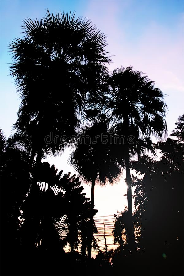 Dramatic atmosphere view of silhouette Palm trees. Dramatic atmosphere panorama view of silhouette Palm trees leaves with exotic tropical twilight sunset sky royalty free stock photos