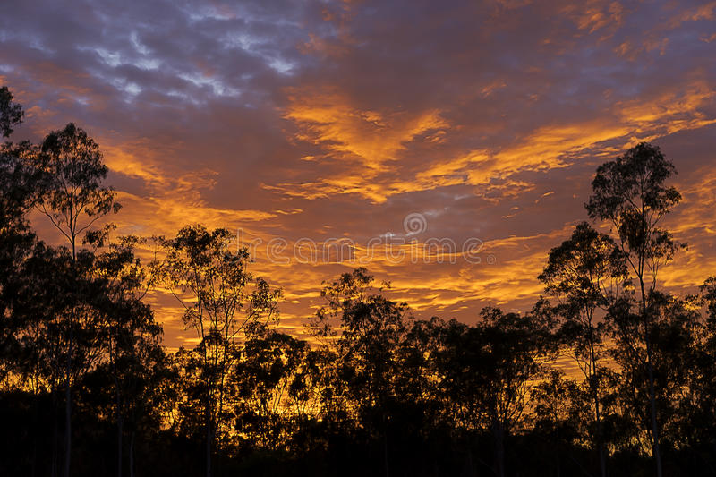 Dramatic australian sunrise with Gum tree silhouette. Early morning with Gum trees bush known as eucalypt forest silhouetted against colorful bright dramatic royalty free stock images