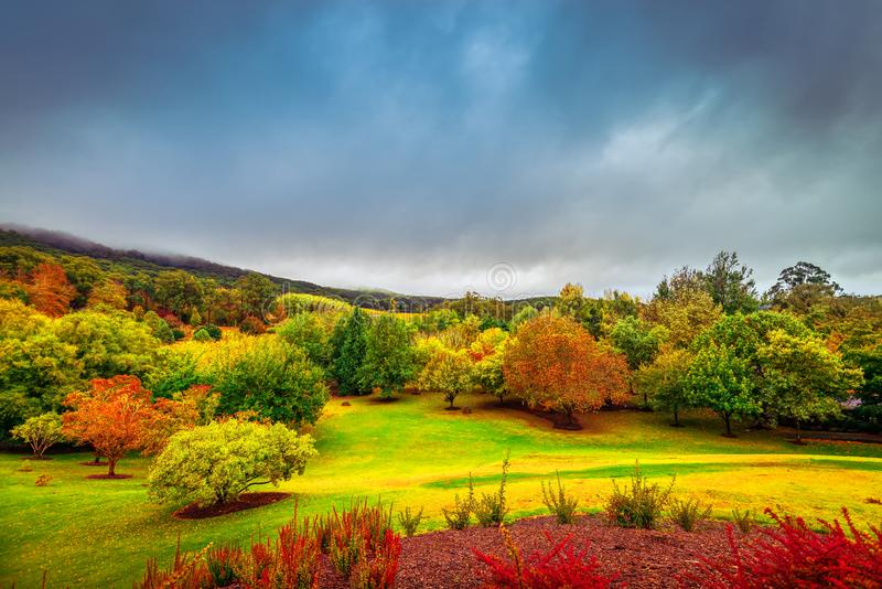 Dramatic autumn scene in Adelaide Hills, South Australia. Dramatic autumn scene with colorful trees under stormy clouds in Mount Lofty, Adelaide Hills, South stock photos