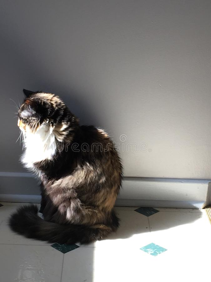 Dramatic Cat stock images