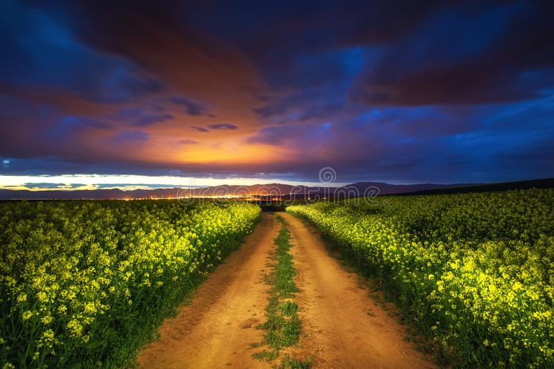 Dramatic clouds over the rapeseed field, beautiful spring night royalty free stock images