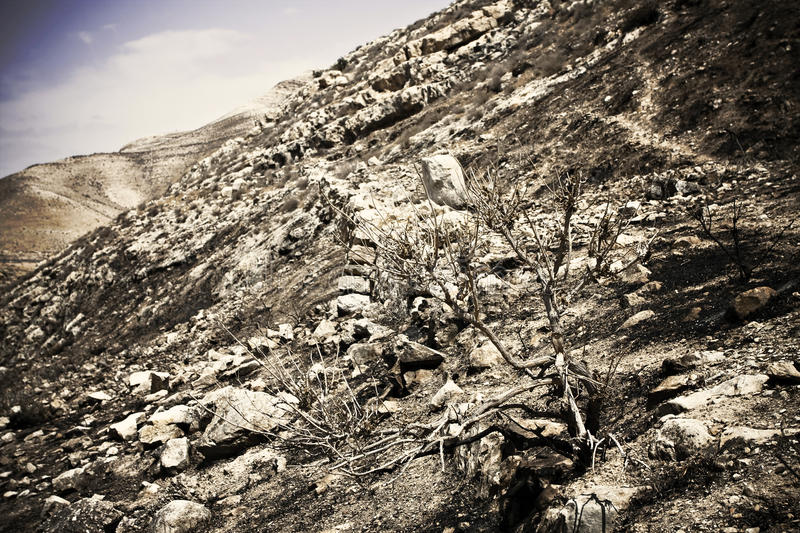 Dramatic Dried Landscape Royalty Free Stock Photography