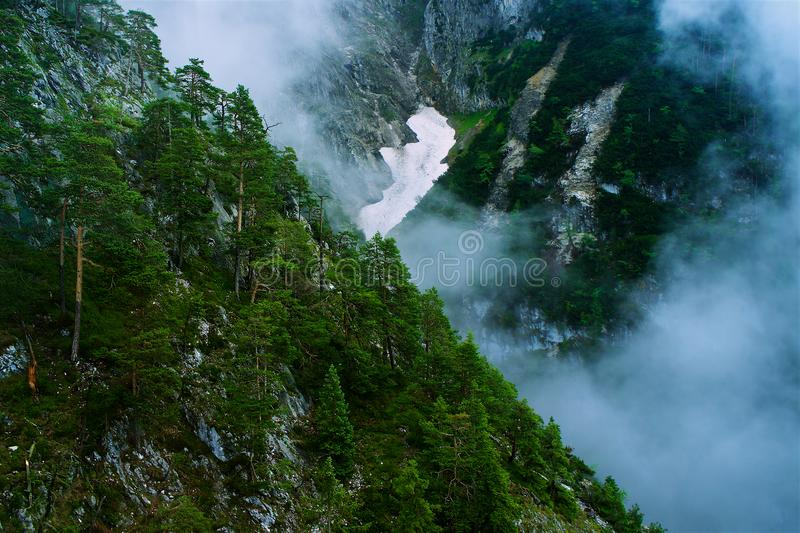 Dramatic epic forest with hill and fog and pine trees stock photos