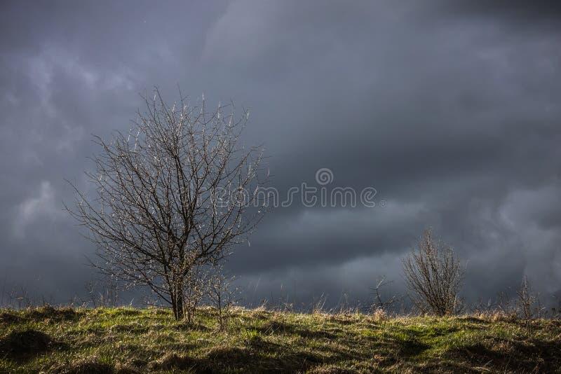Dramatic fall sky royalty free stock photography