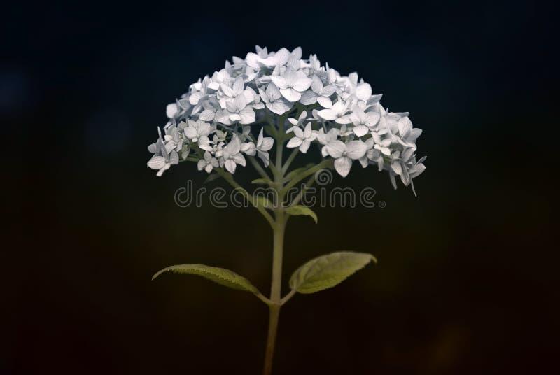 Dramatic flower royalty free stock photos