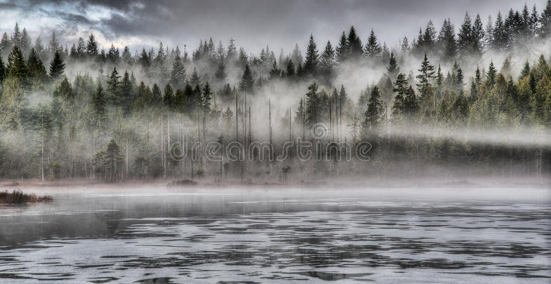 Dramatic Fog in Forest Along Lake stock photography