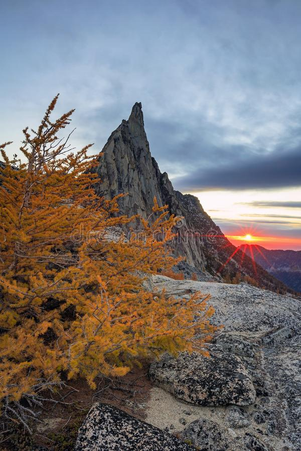 Dramatic golden larches in the Washington mountains, USA. stock images