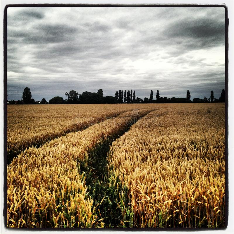 Dramatic Harvest royalty free stock photography