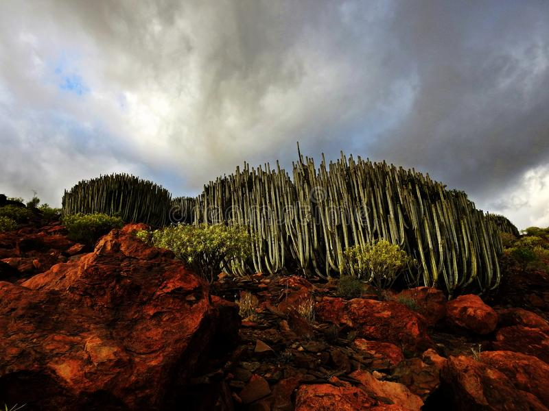 Dramatic landscape of Gran Canaria royalty free stock photos