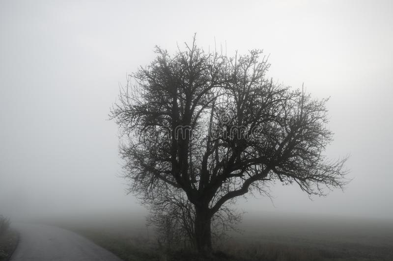 Tree silhouette and road through winter mist royalty free stock images