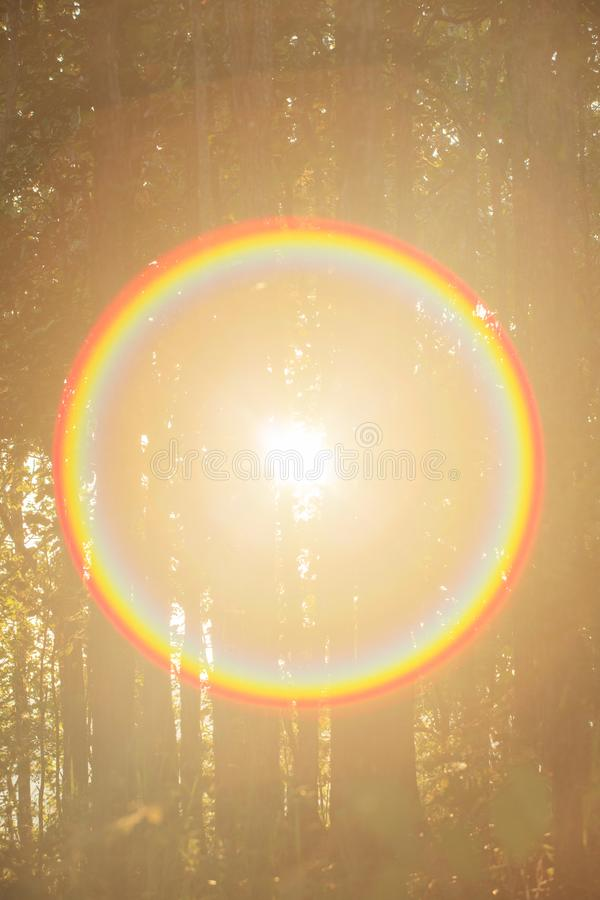 Dramatic light. Trough woods trees in winter forest. Magic time. Lens flare effect stock photos