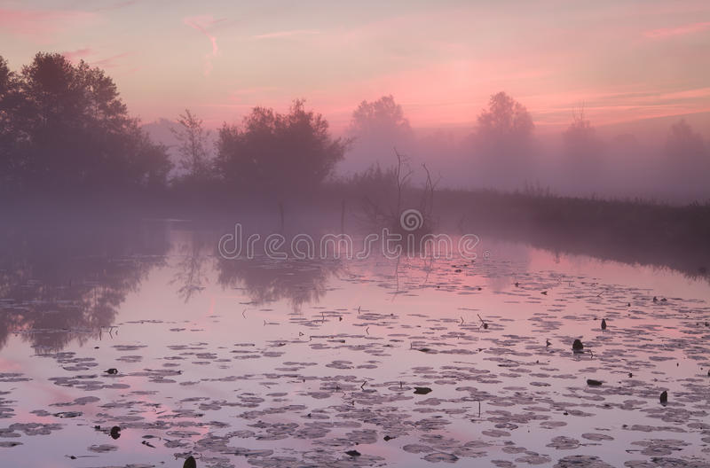 Dramatic misty sunrise over lake with water lily. Dramatic misty sunrise over wild lake with water lily stock images