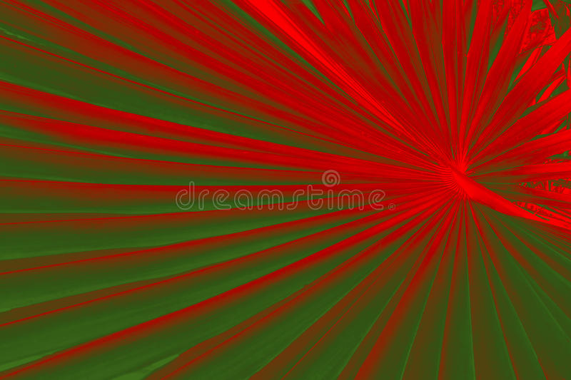 Dramatic pattern in palmetto leaves with Christmas colors red an. Abstract red and green fan pattern of a palmetto leaf from south Florida stock images