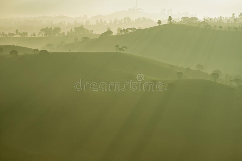 Dramatic scenery of silhouette of trees in green and misty tea plantations in morning, Bandung, Indonesia. Tea plantation covered by mist in sunny morning stock image