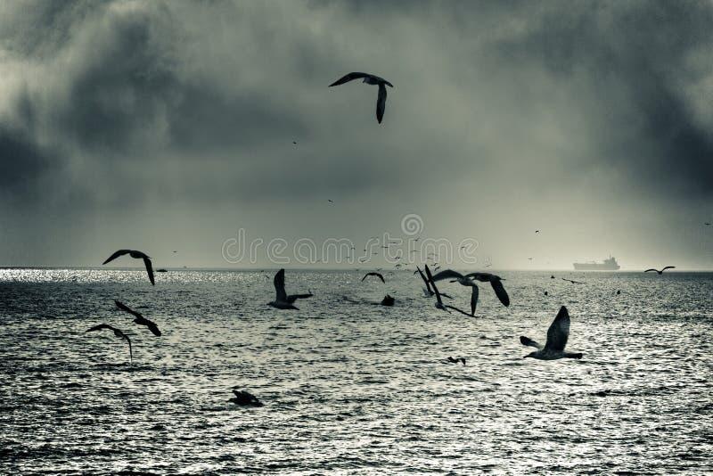 Dramatic sea gull flight. Abstract creative toned photo royalty free stock photography