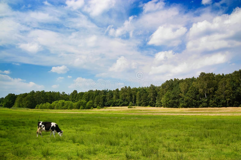 Download Dramatic Sky Over A Cow In The Meadow Stock Image - Image: 10471085