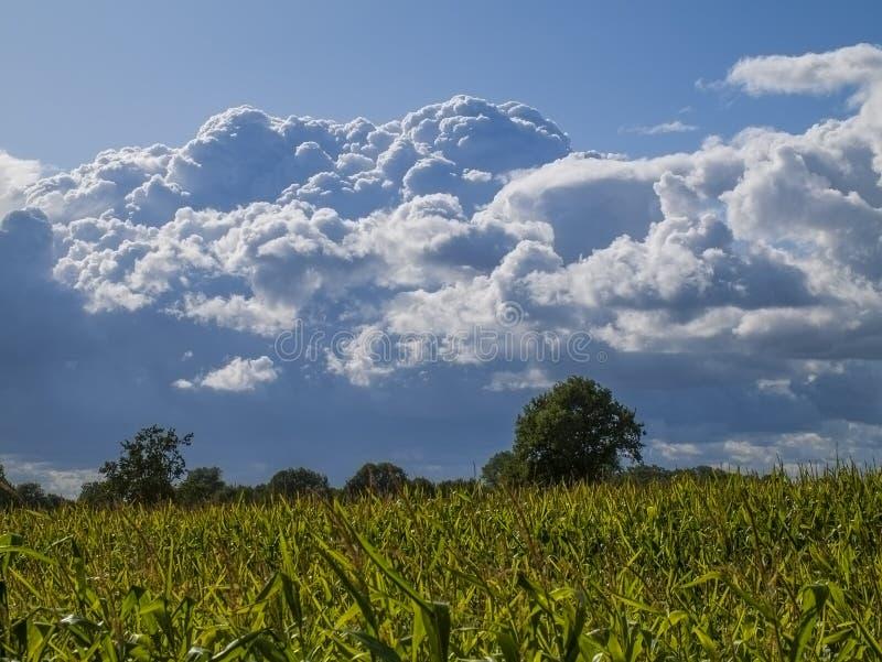 Big cumuli nimbus stock photography