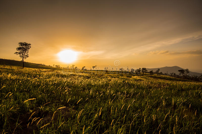 Dramatic Sunrise over. Morning in Meadow Dramatic Sunrise over with light Golden royalty free stock image