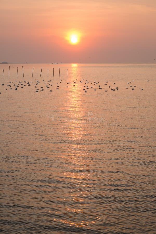 Download Dramatic Sunrise At QM. Bangpu Recreation Center Stock Image - Image: 30309657