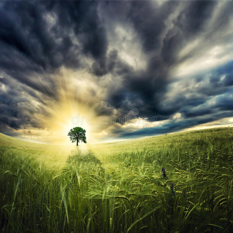 Download Dramatic sunset stock photo. Image of meadow, crops, paradise - 25749010