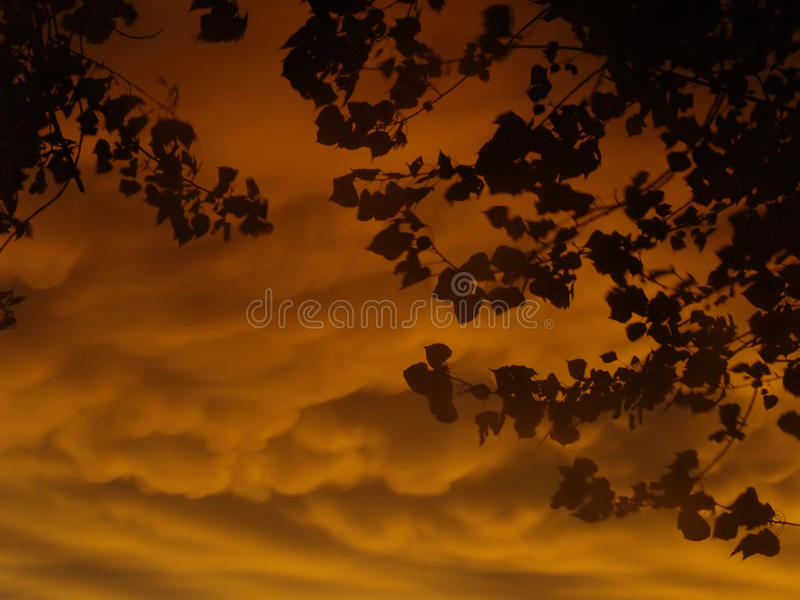 Download Dramatic Sunset With Leaves Stock Image - Image: 26510831