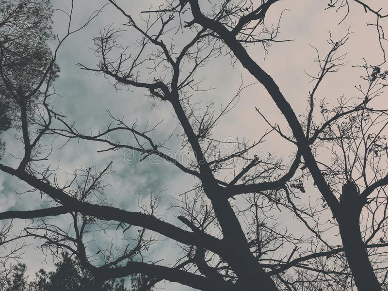 Dramatic tree branches over a dark sky stock images