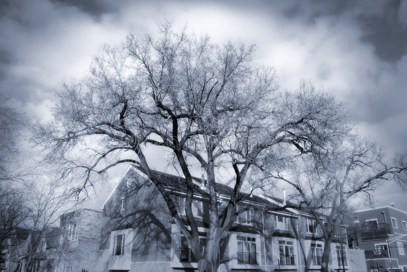 Download Dramatic Trees Stock Photography - Image: 1901902